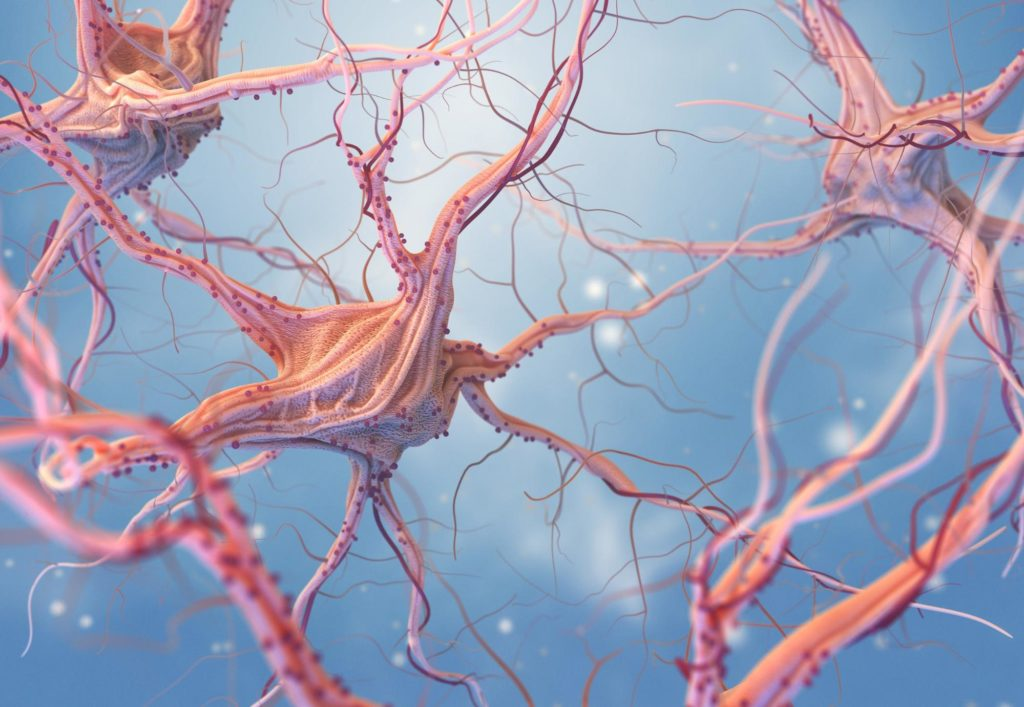 Alzheimers Neuron Disruption in the Brain