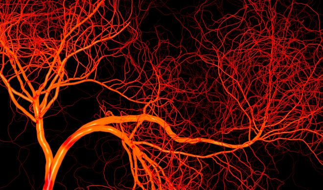 Blood Vessel Growth Through Angiogenesis